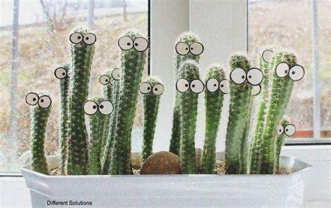cactus home decor happy cactus home decor pinterest