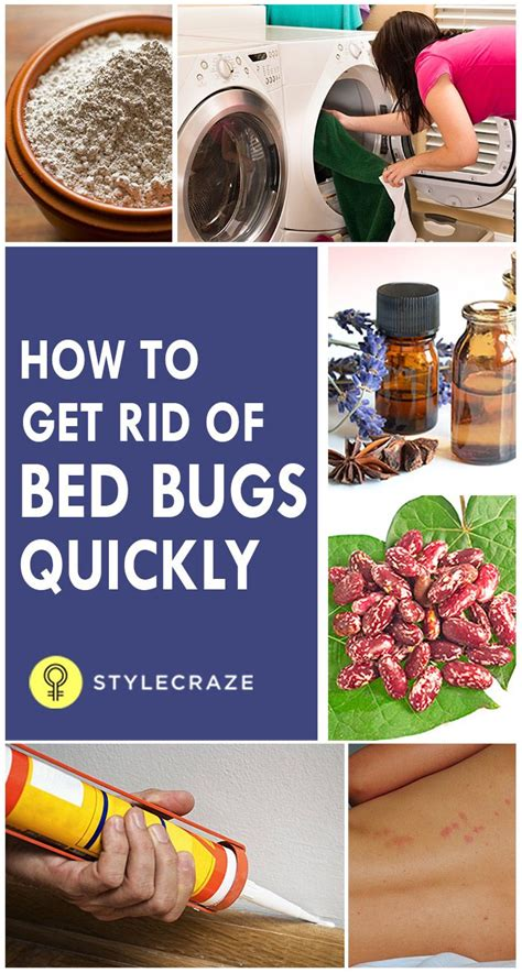 How To Kill Bed Bugs Fast by How To Get Rid Of Bed Bugs Quickly Hacks