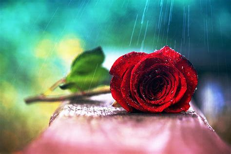 imagenes de uñas artisticas galer 237 a de im 225 genes descripci 243 n de las rosas