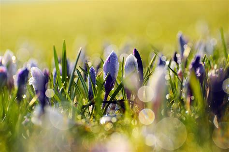 image of spring flowers spring flowers free stock photo public domain pictures