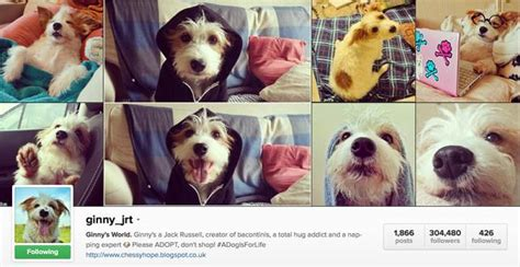 funny bio for dog instagram 30 great instagram accounts for dog lovers mnn mother