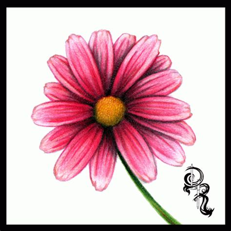 flowers in colored pencil how to draw a daisy in colored pencil flowers how to draw colored pencils and