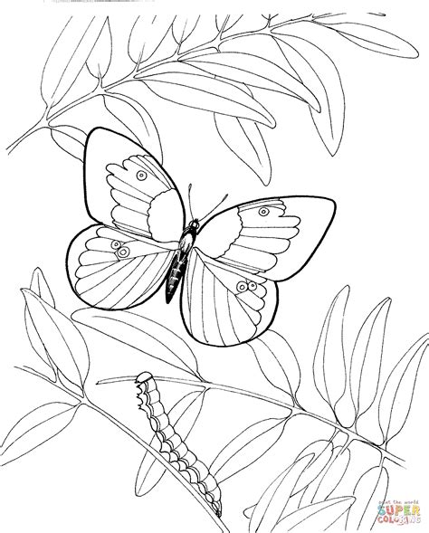 coloring pages of butterflies and caterpillars caterpillar butterfly coloring page kids coloring page