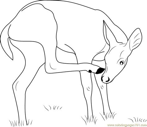 key deer coloring page  deer coloring pages