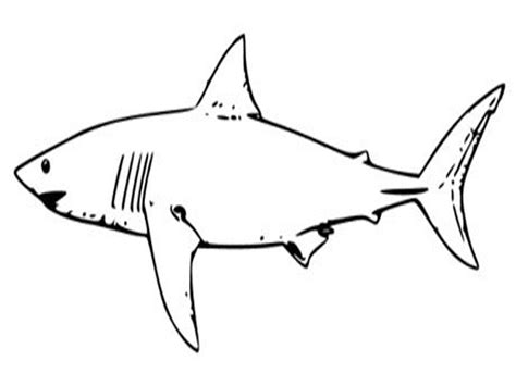 what color are sharks free printable shark coloring pages for