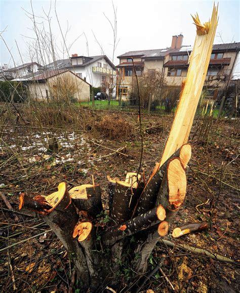 Bauunternehmen Schwarzwald by Bauunternehmen Ignorieren Baumschutzsatzung Wie Die Axt
