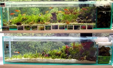 Halophila's Seagrass tank is a prime example of simple beauty Featured Reefs Reef Builders   The