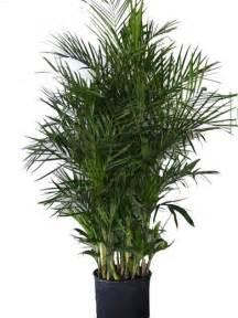 Palm Tree Vase Best House Plants To Improve Indoor Air Quality Bob Vila
