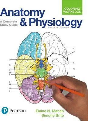 anatomy colouring book blackwells anatomy and physiology coloring workbook elaine n