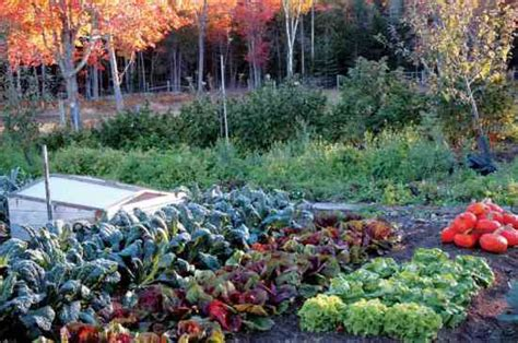 fall vegetables garden home and country living gardening 1