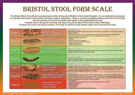 bristol stool form scale by galina imrie