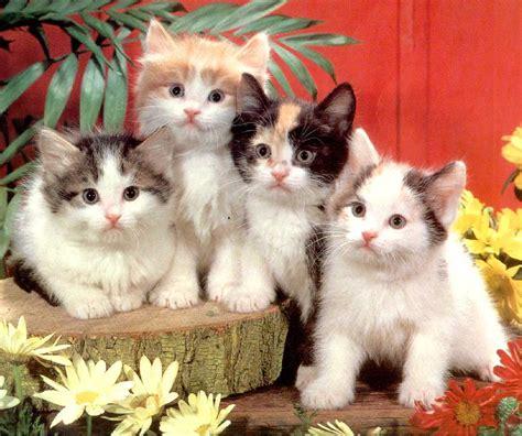 imagenes de gatitos blancas tiernas perritos con gatitos imagui
