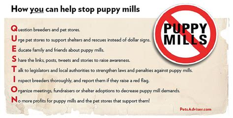 Mills Gets A Warning by 10 Things Puppy Mills You Don T Realize Petful