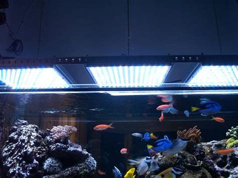 is lighting the reef tank with fluorescent lighting led aquarium ls to light a reef tank led grow light