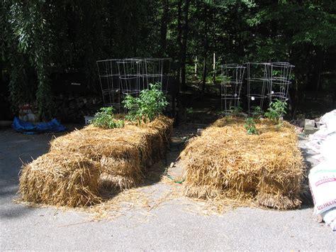 Straw Bale Vegetable Garden Garden In The Woods Straw Bale Garden Wall