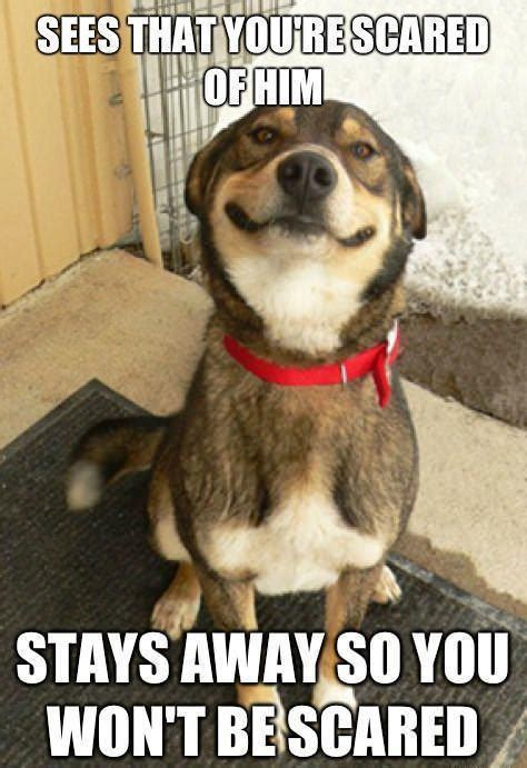Memes About Dogs - 21 funny dog memes