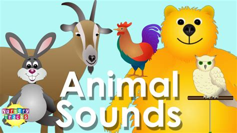 animal sounds song part  youtube