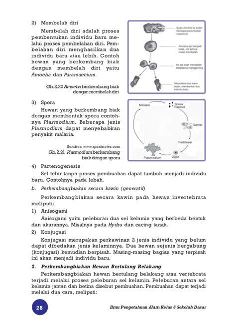 Ensiklopedia Mini Tubuh Manusia ilmu pengetahuan alam