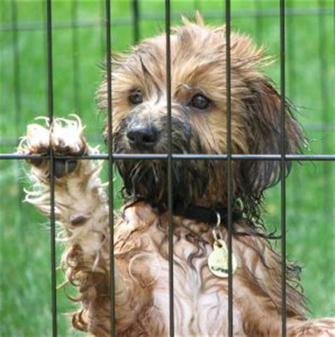 places to adopt dogs places to adopt a puppy abandoned dogs puppy adoptions rescue shelters d