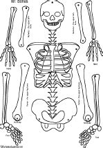 skeleton template to cut out skeleton craft enchanted learning software