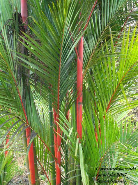 sun tropical plants hawaiian tropical plant nursery palms