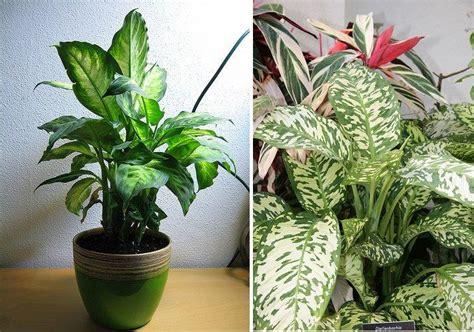 imagenes de plantas verdes de interior plantas de interior decoraci 243 n del hogar