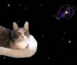 magic cat jimmyfungus cat gifs the best funniest cutest