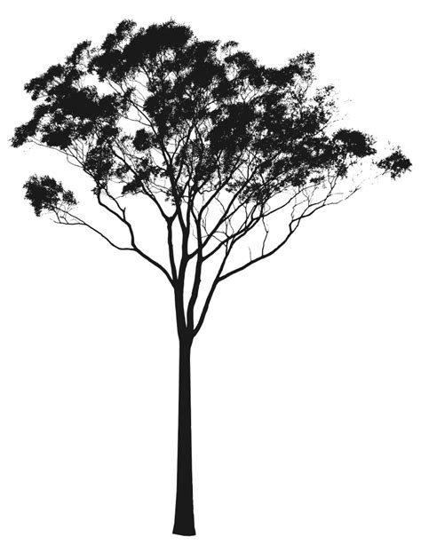 Tree gum clipart - Clipground Hot Dog Clipart Black And White