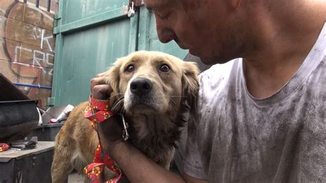 golden retriever rescue philadelphia california golden retriever s heartwarming rescue on abc news