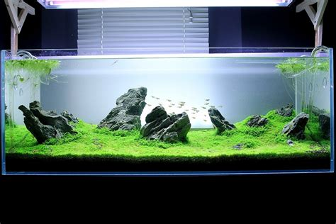 How To Make Aquascape how create an iwagumi aquascape aquarium cyprus