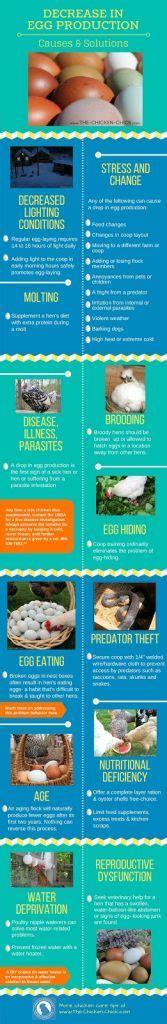 decrease  egg production  solutions