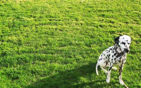 cani da giardino in giardino pro e contro dei cosiddetti cani da