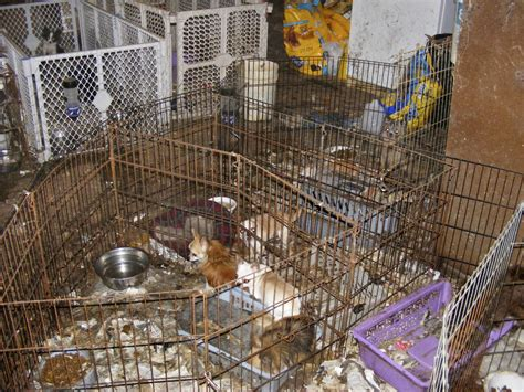 puppy mill newpetowners they are for a reason