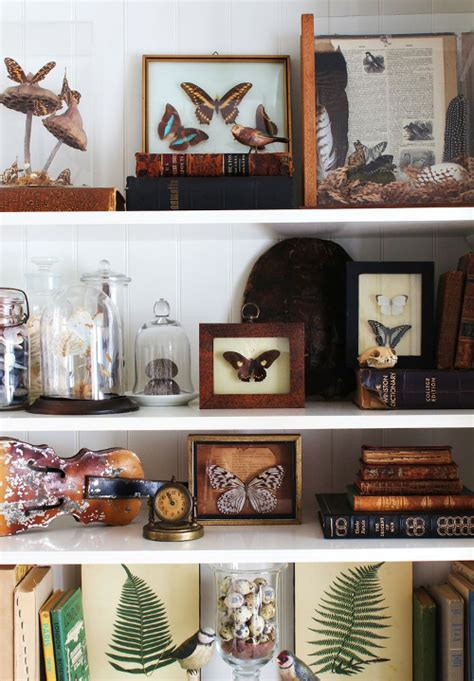 your own cabinet of curiosities trend alert history clair interior