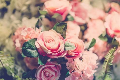 5 Ways To Welcome by 5 Ways To Welcome Seven Roses