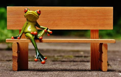 frog on a bench free photo frog sit bank bench rest break free