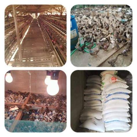Jual Roti Pakan Ternak Semarang pakan ternak unggas home
