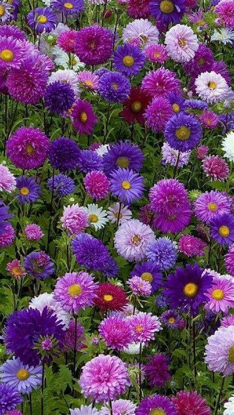 Fleurs Odorantes Pour Balcon by 201 Pingl 233 Par D R Sur Purple Fleur Jardin