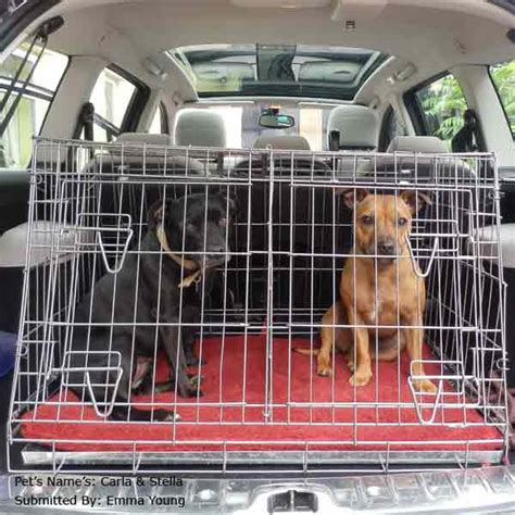 car crate car crates sale free uk delivery petplanet co uk