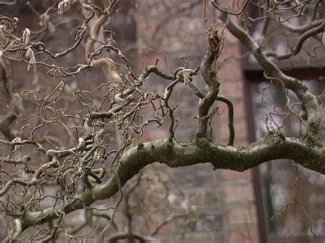 bring the garden indoors by forcing tree branches hgtv