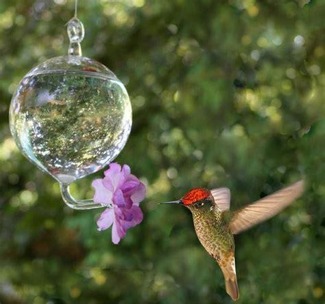 imagenes de casitas y bebedero p colibri con botellas descartables picaflores importantes recomendaciones para tu bebedero