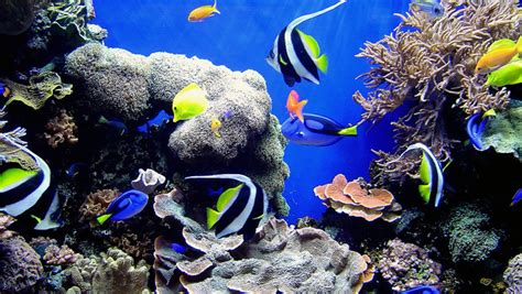 Marine Aquarium Aquascaping by Simple Tips For Effective Marine Aquarium Aquascaping