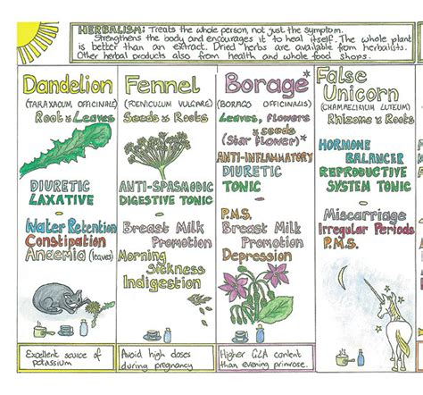 herbs chart a woman s healing herbs chart