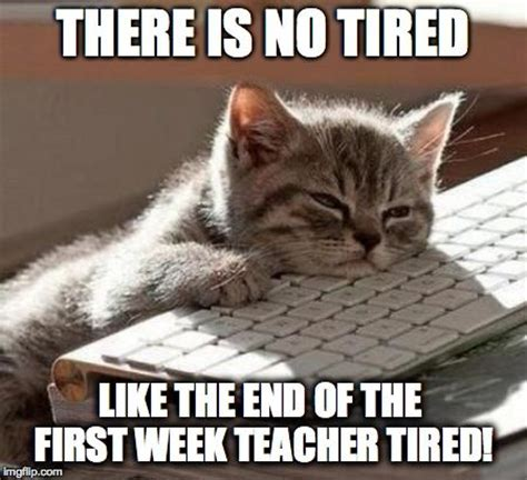 First Week Of School Meme - cats first week and end of on pinterest