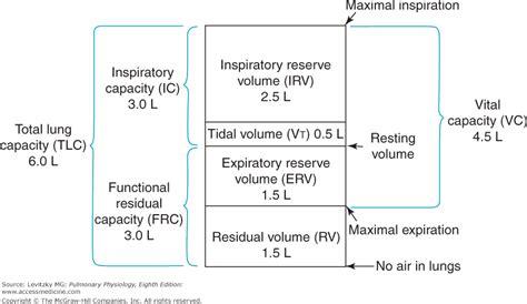 compress pdf half size pulmonary ventilation volumes www pixshark com images