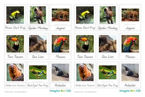 animals of the ocean for the montessori wall map south america rainforest animals
