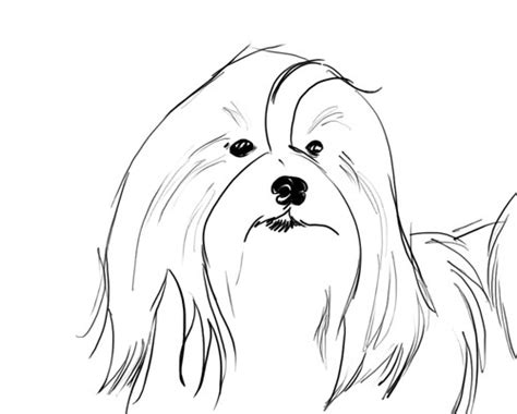 havanese dog coloring page havanese coloring pages coloring coloring pages
