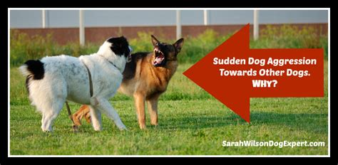 aggression towards sudden aggression towards other dogs why