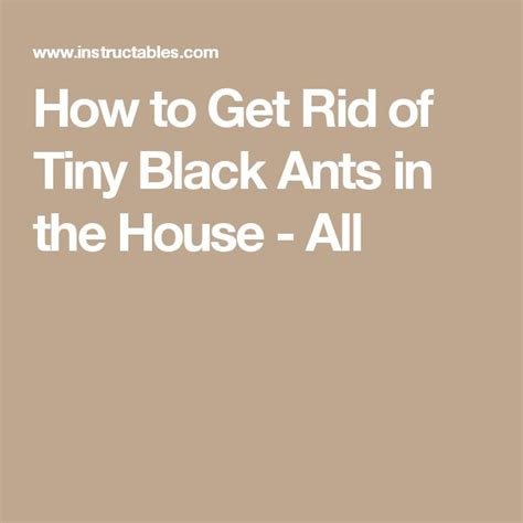 how to get rid of small ants in bathroom 25 best ideas about black ants on pinterest ants in