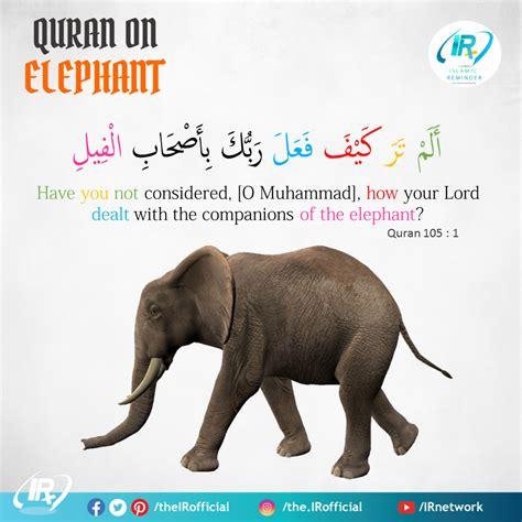 quran  elephant islamic reminder
